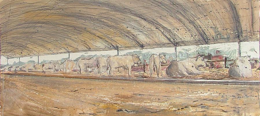 mucche in fuga_1premio_2011_BR